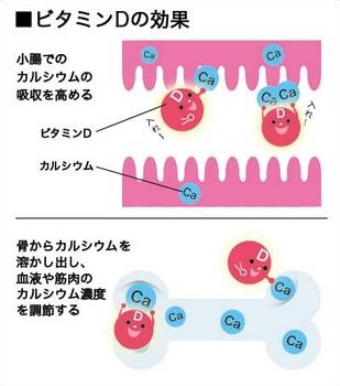 ビタミンD.jpg